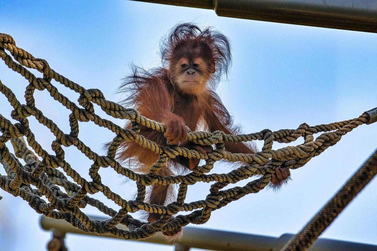 Ma majom fodrásznál jártam...