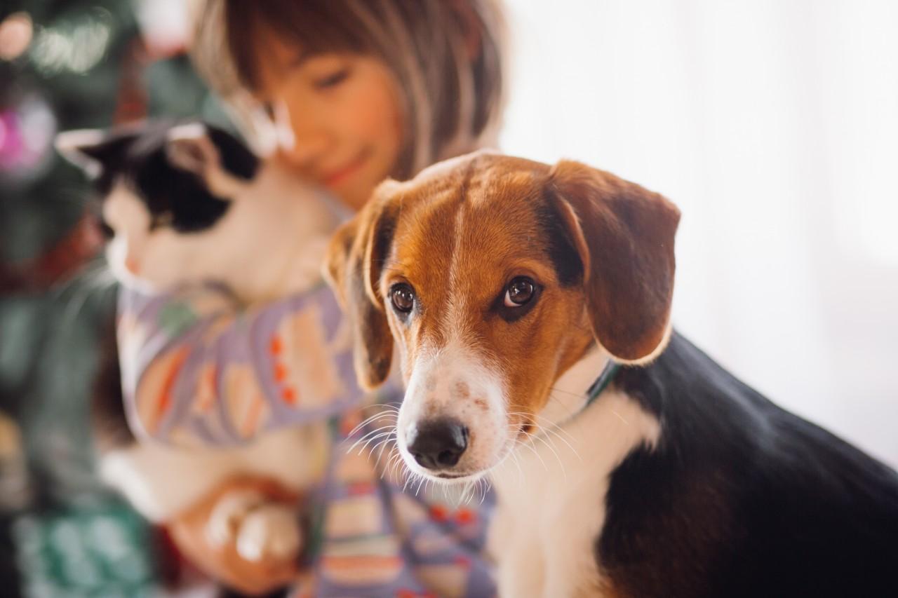 Féltékeny kutyák, avagy csak nekem jár a gazdi szeretete!