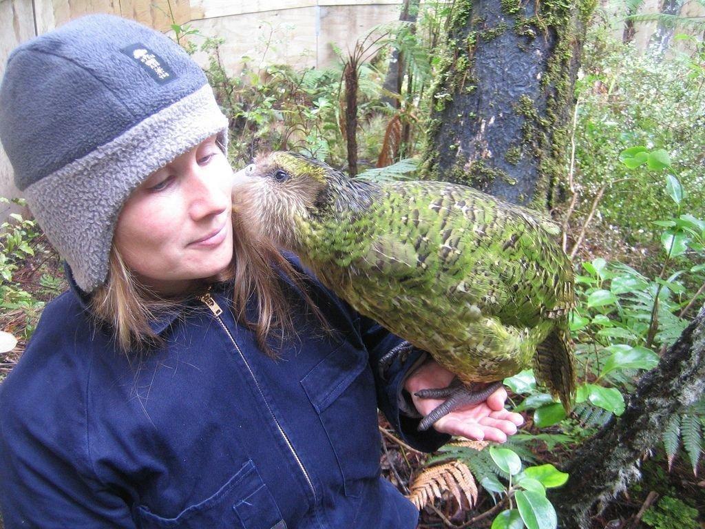 A bagolypapagáj ( kakapó)